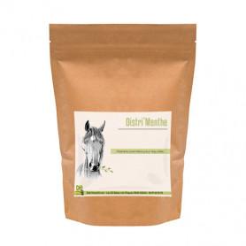 menthe poivrée pour chevaux