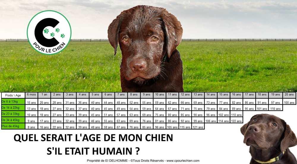 tableau de correspondance de l'âge du chien en âge humain