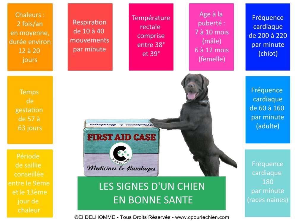 signes de bonne santé du chien