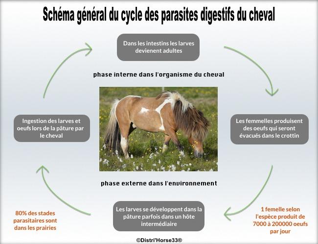 schéma du parasitisme chez les chevaux